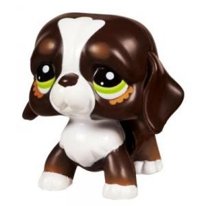 petshop trotteur chien